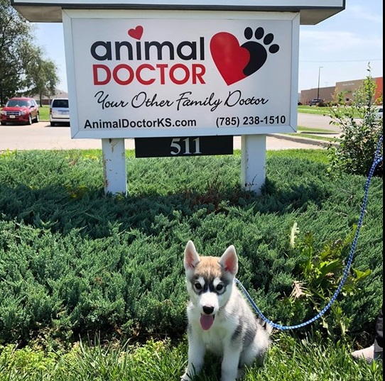 Animal Doctor veterinary clinic in Junction City, KS
