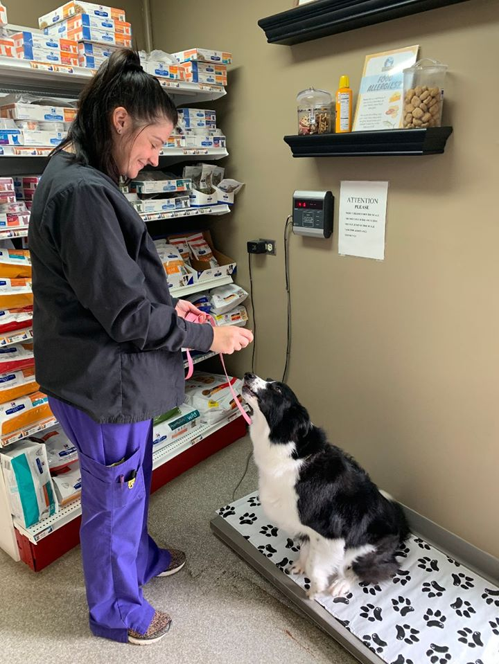 First, our technicians will place your pet on the scale to get an accurate weight.