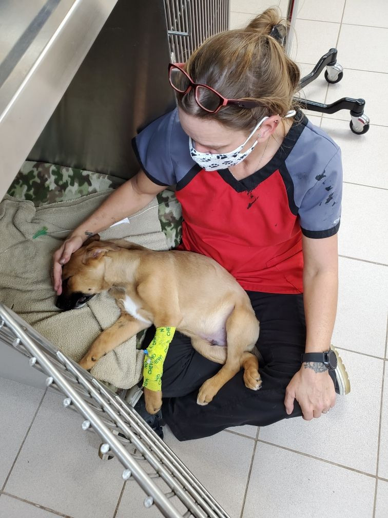 Our veterinary clinic offers dog and cat surgery services to the Junction City, KS and Manhattan, KS surrounding area. We have a full-service hospital that uses advanced, state of the art equipment and diagnostic tools.
